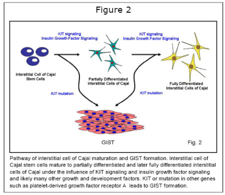 cells of Cajal2