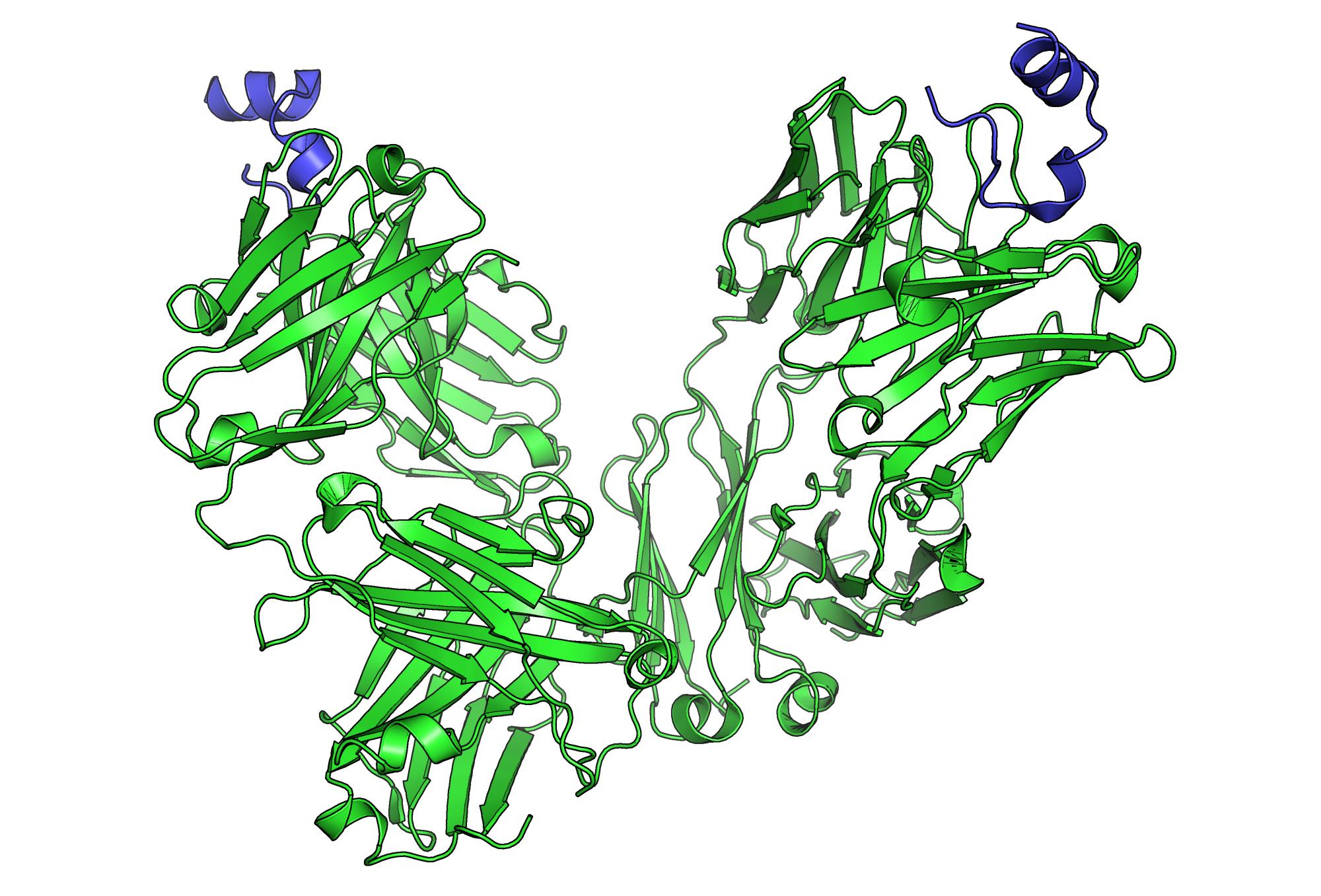 Peptide bound to Rituxima